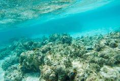 在Yejele海滩礁石的海洋生活 免版税库存照片