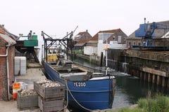 在Zeeland荷兰语省的夏天在荷兰 库存照片