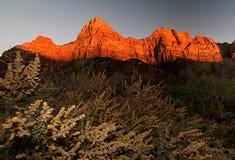在zion国立公园的场面日落的 图库摄影