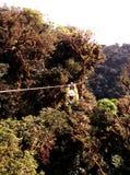在ziplining的雨林之上 免版税库存照片