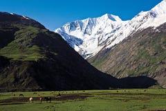 在Zojila通行证的一个风景在高度3529米, Leh斯利那加高速公路,拉达克,印度 库存照片