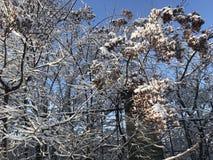 在ZP的不可思议的冬天 图库摄影