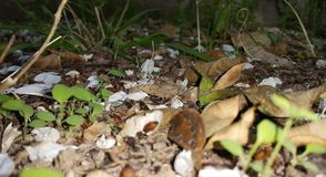 地下森林 库存照片