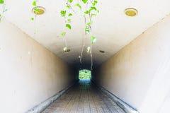 地下步行隧道通过天花板天花板曲拱 库存照片
