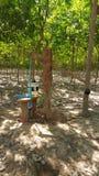 地下灌溉水 免版税库存照片