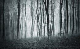 织地不很细单色有雾的神秘的森林 库存照片