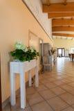 地中海内部-植物在大厅里 免版税库存照片