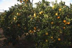 地中海农业 图库摄影