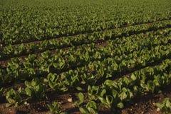 地中海农业 库存图片