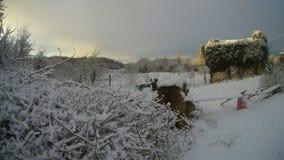 地中海村庄在冬天 免版税库存照片