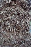 地中海棕榈树纹理 免版税库存图片
