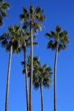 地中海棕榈树 免版税库存照片
