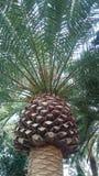 地中海棕榈树 免版税库存图片