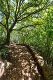 地中海森林在有橡树的Menorca 免版税库存图片
