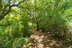 地中海森林在有橡树的Menorca 免版税库存照片