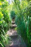 地中海森林风景在Macarella附近的Menorca 免版税库存照片