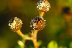 地中海污点salentina的植物群 免版税图库摄影