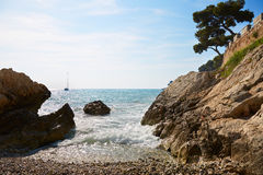 地中海海岸和海有海杉木的 库存照片