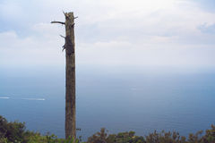地中海的看法在一有薄雾的天 在前景的死的树 免版税库存照片