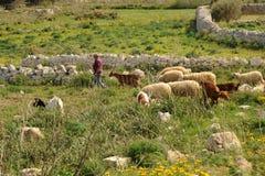 地中海牧羊人 库存图片