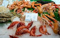 地中海虾 库存图片
