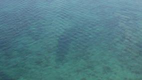 地中海表面 股票录像