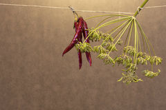 地中海香料、辣椒和茴香籽 免版税库存图片