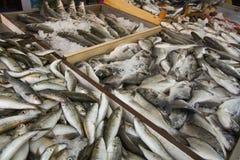 地中海鱼在市场上 免版税库存照片