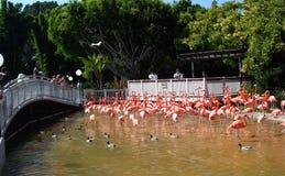地亚哥火鸟粉红色池塘圣海运世界 免版税库存图片