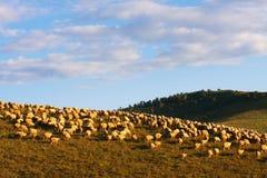 地产牧场地 免版税库存图片