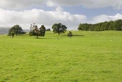 地区农田湖英国 免版税库存图片