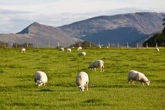 地区英国农厂湖 免版税库存图片
