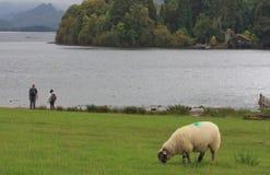地区英国湖 库存照片