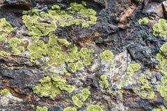 地图地衣特写镜头在岩石的 免版税库存照片