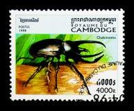 地图集甲虫Chalcosoma sp 昆虫serie,大约1998年 图库摄影
