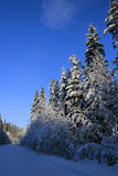 地峡卡累利阿人的冬天 免版税库存照片