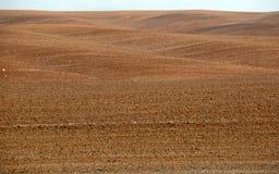 地平线在沙漠 图库摄影