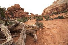 地平线曲拱,拱门国家公园,默阿布犹他 免版税库存照片