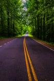 地平线驱动在Shenandoah国家公园一个沉重被遮蔽的森林区域  免版税库存图片