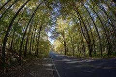 地平线驱动-树和路 免版税库存照片