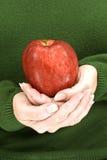 轻轻地拿着红色美味苹果的手 库存照片