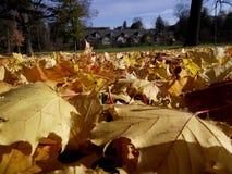 地方公园秋天下午 库存照片