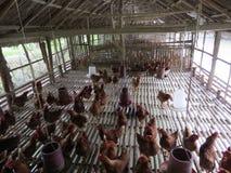 地方养鸡场,孟加拉国 库存照片