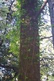地方希洛的大农场公园包括橡木森林地,混杂的常青树,土坎森林有圣罗莎的详尽的看法 库存照片