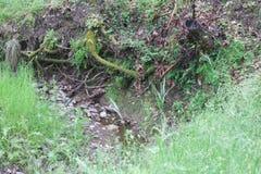 地方希洛的大农场公园包括橡木森林地,混杂的常青树,土坎森林有圣罗莎的详尽的看法 免版税图库摄影