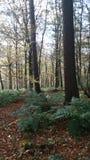 地方森林 库存图片