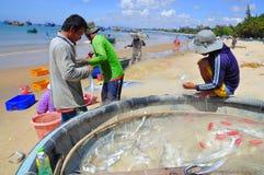 地方渔夫从他们的在Lagi海滩的捕鱼网去除鱼 库存照片