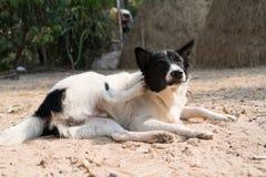 地方狗黑白放下在锻炼瑜伽的沙子 免版税库存照片