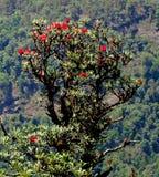 地方的树穿上inthanon登上泰国 库存图片