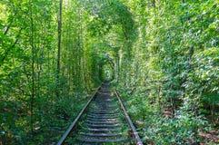 地标在乌克兰森林里 库存照片